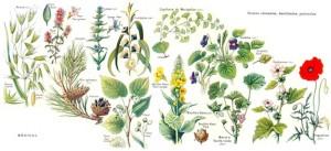 plant-redo